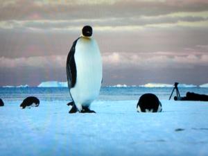 Pinguin im Eis